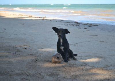 Perrito con pelota de Coco