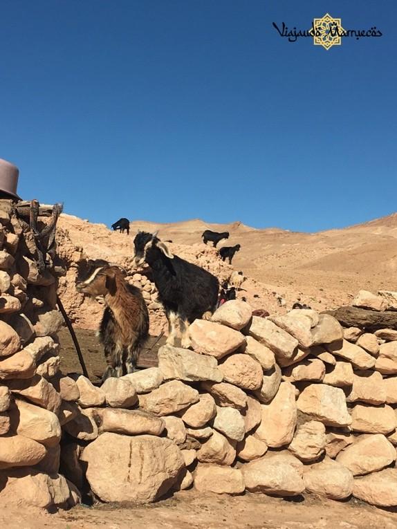 Campamento en el Desierto de Sahara - Marruecos - África