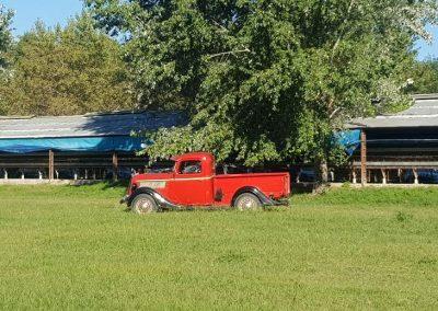 Visita a una Granja Chacra Los Cardales Camioneta