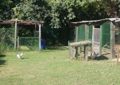 Visita a una Granja Chacra Los Cardales Gallinero