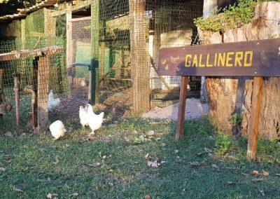Visita a una Granja Chacra Los Cardales Gallinas