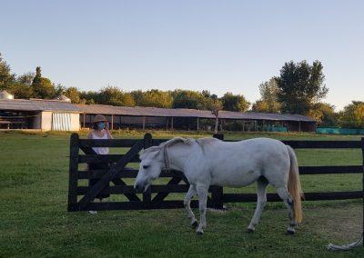 Visita a una Granja Chacra Los Cardales Liberan Caballos